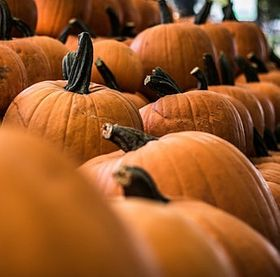 colours-of-nature-pumpkin