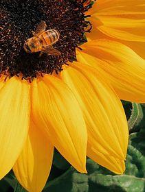pollen-allergy-triggers-eczema