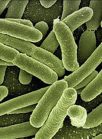 do probiotics help eczema